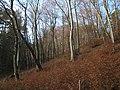 Poskręcane buki - panoramio.jpg