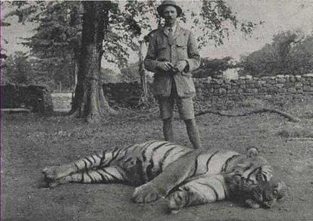 фото тигр людоед