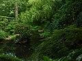 Pražská botanická zahrada, Prager botanischer Garten - panoramio (5).jpg