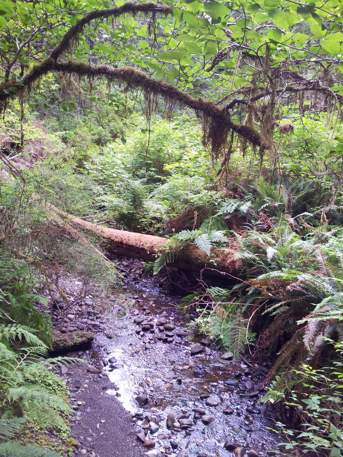 Prairie Creek California Wikipedia