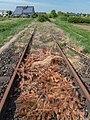Prichsenstadt railway track 4290388.jpg