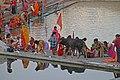 Pushkar-heiliger See-08-Ghats-Kuh-2018-gje.jpg
