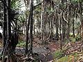 Réunion Puits des Anglais Vacoa Küstenwald.JPG