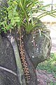 R.H.S. Practice Green Nov 2007 - panoramio.jpg