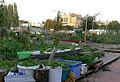 Rabot-BlaisantvestUrbanGardeningGentBelgium2009 10 00 160.jpg
