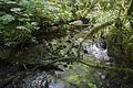 Rain Forest Trail (14699499033).jpg