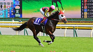 Real Steel (horse) Japanese-bred Thoroughbred racehorse