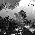 Reflections on the water.jpg