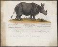 Rhinoceros indicus - 1700-1880 - Print - Iconographia Zoologica - Special Collections University of Amsterdam - UBA01 IZ22000237.tif
