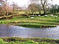 River Leven - geograph.org.uk - 299108.jpg