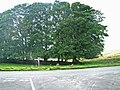 Road junction and copse, Bank Moor - geograph.org.uk - 939939.jpg
