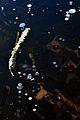 Robenhauser Riet 2012-01-18 14-44-42.JPG