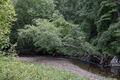 Rock Creek Park, NW, Washington, D.C LCCN2010641485.tif