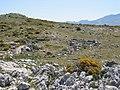 Ruinas de la casa natal de Pasoslargos (3814450794).jpg
