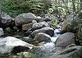 Ruisseau à Bruschiccia.jpg