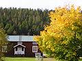 Ruskola. lönn i höstskrud1-Meänmaa.jpg