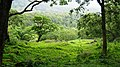 Safari @ Anamalai Tiger Reserve - panoramio (5).jpg