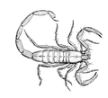 Scorpion 2 (PSF).png