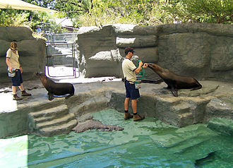 Sea lions at the Melbourne Zoo Seals@melb zoo.jpg