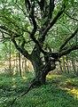 Senden, Venner Moor -- 2013 -- 2316.jpg