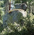 Sequoia National Park - Big Trees Trail - glacial erratics.JPG