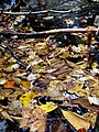 Setrock Creek Falls Black Mountain Campground Pisgah Nat Forest NC 4390 (37947699211).jpg