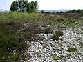 Shattered flint, Ideford Common - geograph.org.uk - 1371415.jpg