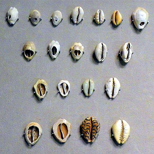 Shellfish Currencies. China Numismatic Museum