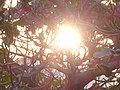 Shining Tree.jpg