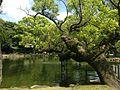 Shinjiike Pond of Munakata Grand Shrine (Hetsu Shrine).JPG