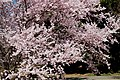 Shinjuku Garden (5651897635).jpg