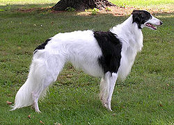 Silken Windhound Nobble Stack F.jpg