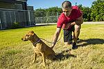 Single Marine Program visits the local Humane Society 130925-M-TH017-017.jpg