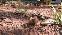 File:Snail self righting (video).webm