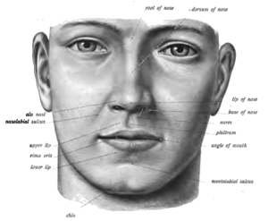 Philtrum - Philtrum visible at centre