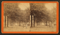 South Broad Street, Savannah, Ga, from Robert N. Dennis collection of stereoscopic views 7.png