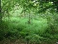 Spring, Widdenton Park Wood - geograph.org.uk - 1329420.jpg