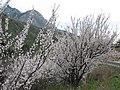 Spring in Tian-Shan.jpg