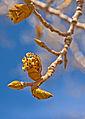 Spring in Zion (6854283576).jpg