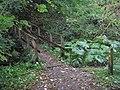 St Cuthbert's Way - geograph.org.uk - 1519060.jpg