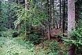 St Stefan Lemsitz Burggelände Waldweg.jpg
