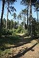 Stapleford Woods - geograph.org.uk - 1391393.jpg