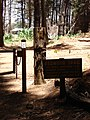 Starr-090521-8443-Sequoia sempervirens-trail sign-Polipoli-Maui (24930238776).jpg