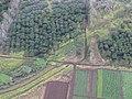 Starr-091112-9472-Macadamia integrifolia-aerial view-Waiehu-Maui (24694018150).jpg