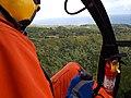 Starr-141014-2236-Caesalpinia decapetala-aerial view-Kakipi Gulch Haiku-Maui (24879616139).jpg