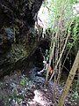 Starr-170304-7193-Pteris cretica-with Forest in lava channel-Lower Waiohuli Trail Polipoli-Maui (33000233650).jpg