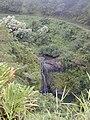 Starr 020813-0039 Syzygium sandwicensis.jpg