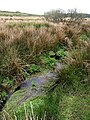 Stream on Bodmin Moor - geograph.org.uk - 793858.jpg