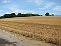 Stubble field east of bridleway to Poringland - geograph.org.uk - 1451459.jpg