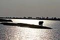 Sunset and elephant.jpg